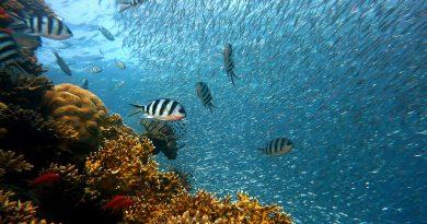 Concours «Arts en plastique pour l'océan»