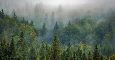 Appel à projets Journée internationale des forêts